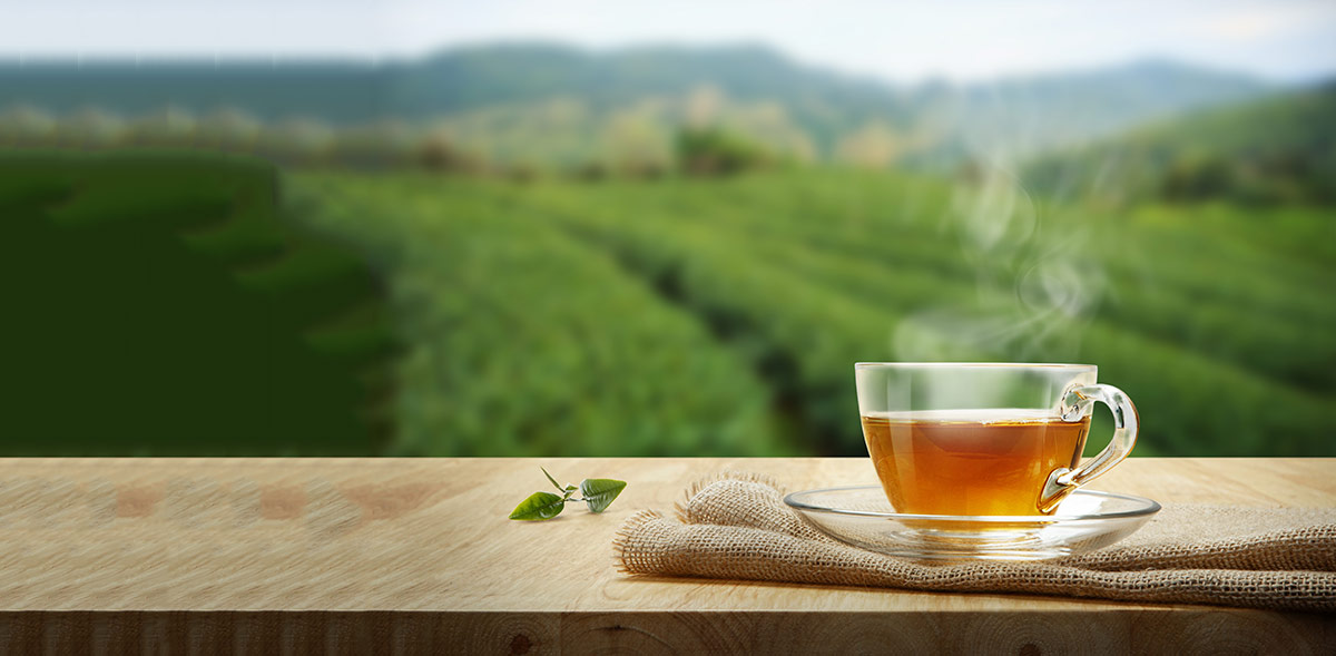 Tea infographic banner