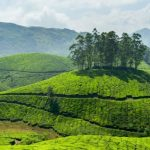 Diverse teas from a diverse India