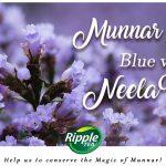 Munnar Blooms Blue…with Neelakurinji!