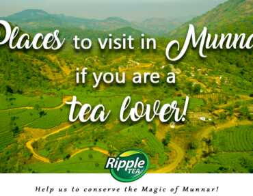 Places to visit in Munnar if you are a Tea lover!